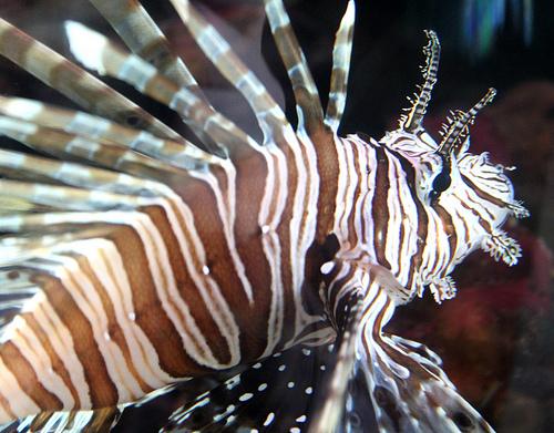 St Louis Missouri World Aquarium Photo Picture Image