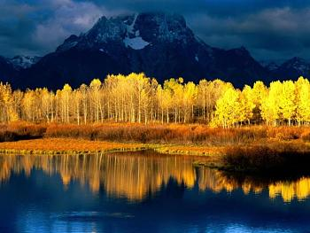 Must SEE to BELIEVE-quaking-aspen-mount-moran-grand-tetons-wyoming.jpg