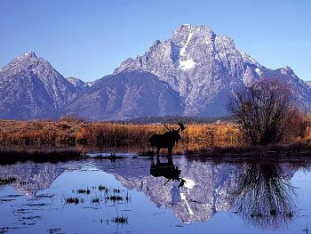 Must SEE to BELIEVE-moose-mirror.jpg