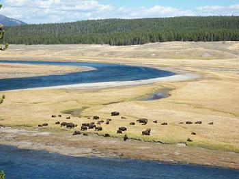 Must SEE to BELIEVE-yellowstone-river.jpg