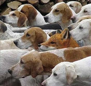What do you do for fun in Montana?-foxhunt.jpg