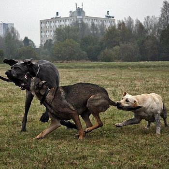 Entitlement Program-dog_fight.jpg