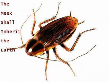 The Evolutionary Theory and Schools-cockroach_meek.jpg