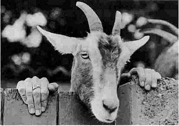Jon Huntsman bitten by goat-goat-boy.jpg