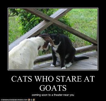 Jon Huntsman bitten by goat-cat-stares-goat.jpg