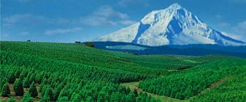 Grinch Tax Held Back for This Year-christmas-tree-farm-oregonj.jpg