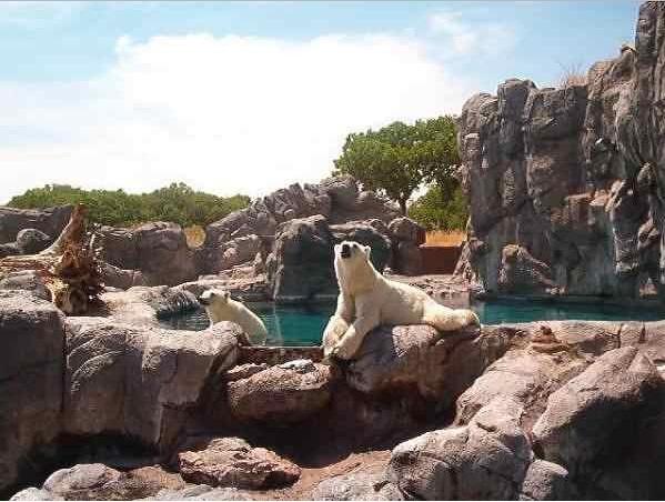 Rio Grande Zoo Related Keywords & Suggestions - Rio Grande Zoo Long ...