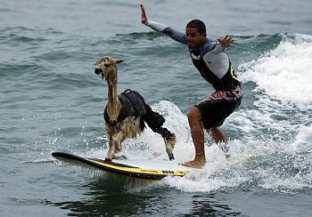 world's top surfers hit New York-alpakasurfer02.jpg