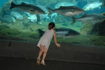 New York New York New York Aquarium Photo Picture Image