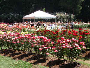 Raleigh Rose Garden Raleigh North Carolina