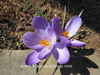A Night Out on CityProfile - Photo Contest-crocus-hammersteam-09.jpg