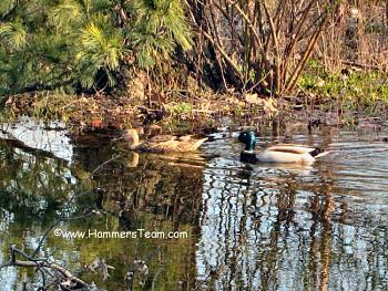A Night Out on CityProfile - Photo Contest-ducks-buck-lucy.jpg