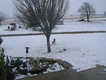 My Strange Little Neighborhood Creature!-01-10-2011-001.jpg