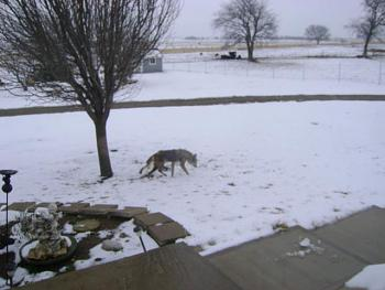 My Strange Little Neighborhood Creature!-01-10-2011-004.jpg
