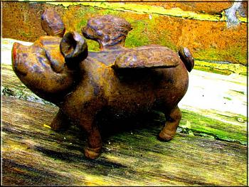 as a hobby,what do you collect?-now-you-cant-say-you-never-saw-flying-pig.jpg