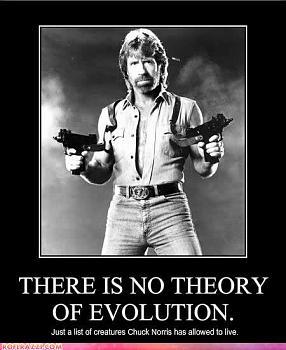 Chuck Norris-chuck-norris-1-.jpg