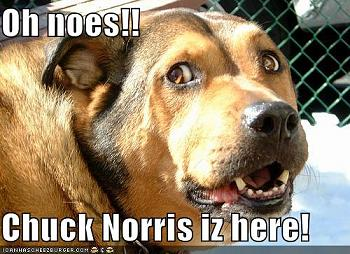 Chuck Norris-ohnoeschuck128534317431250000.jpg