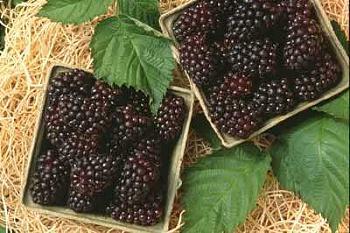 Pie-marionberry-baskets.jpg