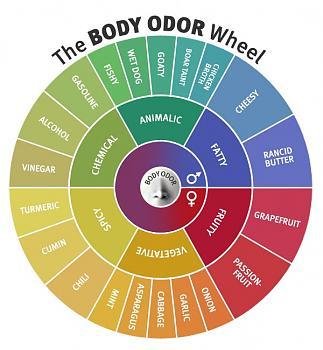 What ticks you off on a regular basis-body-odor-wheel.jpg