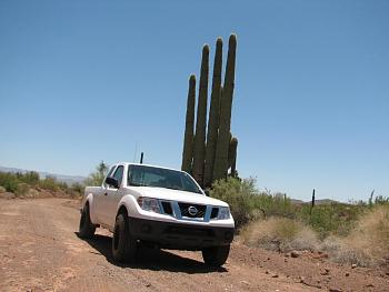How BIG will a SAGUARO get?-signal-203.jpg