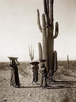 How BIG will a SAGUARO get?-saguaro-gatherers.jpg