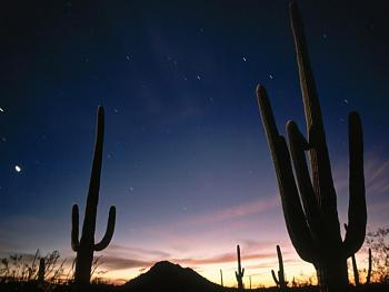 How BIG will a SAGUARO get?-star-trails-saguaro-national-park.jpg