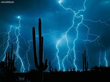 How BIG will a SAGUARO get?-stormy_weather_saguaro_cactus.jpg