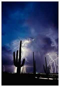How BIG will a SAGUARO get?-lightning_saguaro.jpg