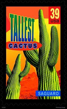 How BIG will a SAGUARO get?-tallcactus.jpg