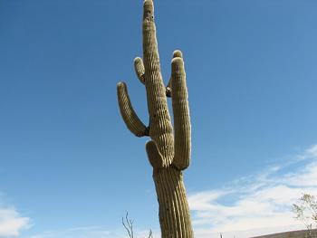 How BIG will a SAGUARO get?-camping-april-fools-day-078.jpg