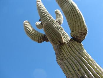 How BIG will a SAGUARO get?-camping-april-fools-day-077.jpg