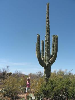 How BIG will a SAGUARO get?-saguaronationalpark.jpg