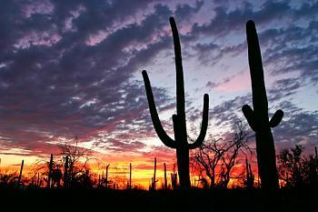 How BIG will a SAGUARO get?-saguaronationalpark5.jpg