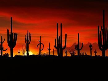 How BIG will a SAGUARO get?-sonoran-desert-sunset.jpg