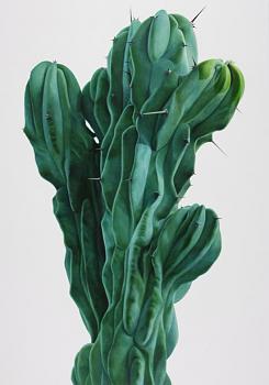 How BIG will a SAGUARO get?-kwangho-lee_cactus_1-1-.jpg