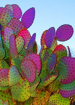 How BIG will a SAGUARO get?-colorful-prickly-sky-lg-2-.jpg