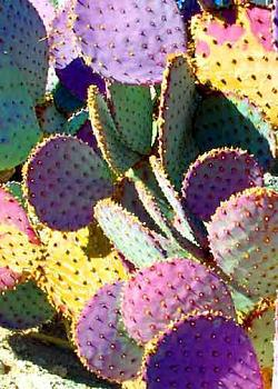 How BIG will a SAGUARO get?-very-colorful-prickly-lg.jpg