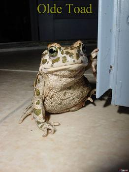 Chill out!  Christmas/Winter in July-toad_01.jpg