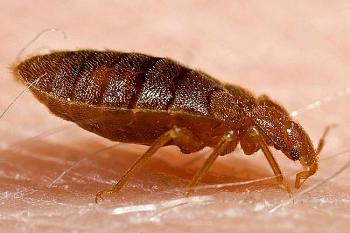 a warning to everyone-bed-bugs.jpg