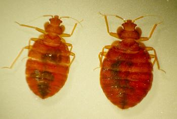 a warning to everyone-bed-bugs-1-.jpg