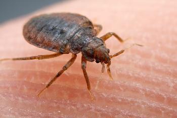 a warning to everyone-bedbug600.jpg