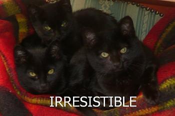 i has kittens..............-irresistible.jpg