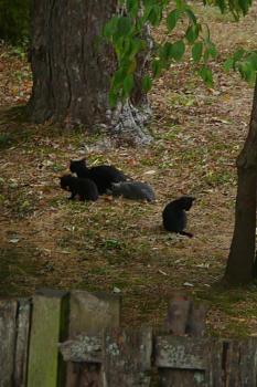 i has kittens..............-pack.jpg