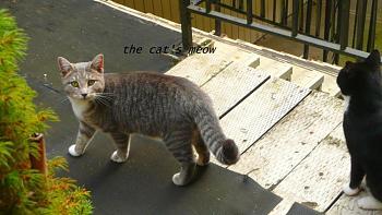 i has kittens..............-cats-meow.jpg