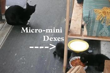 i has kittens..............-mmdssm.jpg