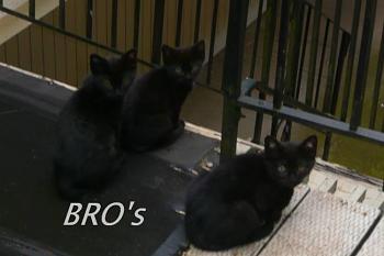 i has kittens..............-bros.jpg