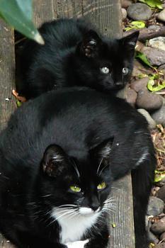 i has kittens..............-p129.jpg