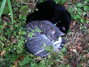 i has kittens..............-p660.jpg