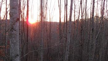 random pictures from your camera-deer-stand-pics-11-12-2011-002.jpg