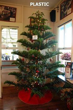 Christmas trees . . .-norfolk-chirstmas-treep.jpg